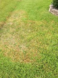 Example of an overwatered lawn