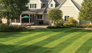 Choosing Lawn Care Professionals